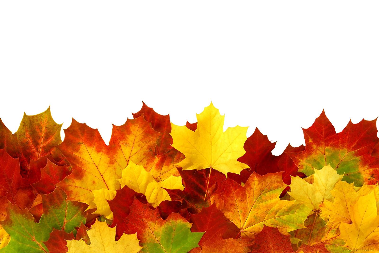 воспитания картинка для фона осень на прозрачном фоне пусть вас опекает